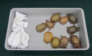 香港查获市值1900万港币走私濒危物种,含85只活蛙