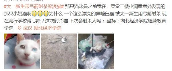 """校方通報""""武漢大一新生帶弓箭射殺流浪貓"""":予以退學處理"""