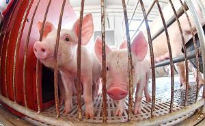 安徽省銅陵市義安區非洲豬瘟疫區解除封鎖,疫情已被撲滅