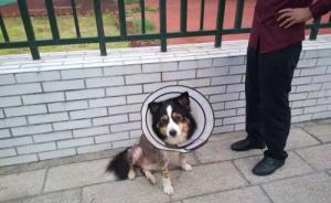 俄罗斯文明养犬经验谈:养狗非小事,法律规定严