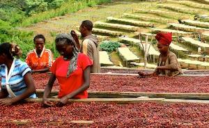 体验传统埃塞俄比亚咖啡仪式的美妙