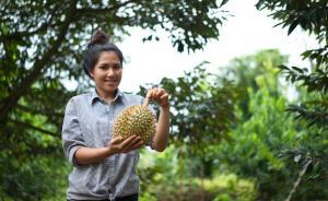 中国需求改变泰国榴莲市场:单一种植后,呼唤多样化发展