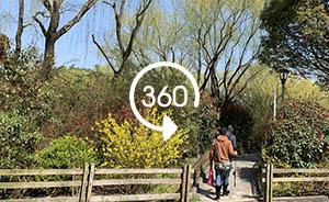 360°全景|綠溢上海:楊浦綠道擁有本地植物達300余種