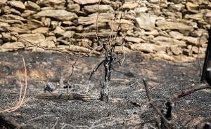 意大利学生在山林烧烤引发大火,法院判罚款2700万欧元