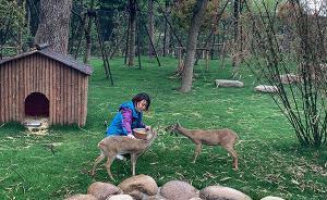貉、獐、狗獾、黄麂、豪猪……一大波上海乡土动物在此亮相