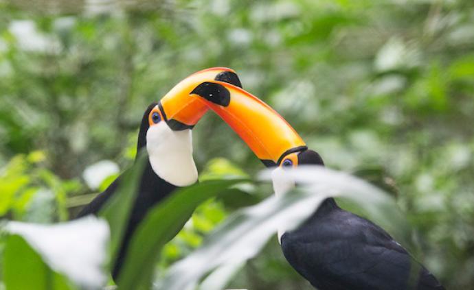 世界环境日 | 住在热带雨林深处,躺在床上也能观鸟