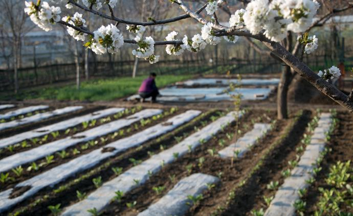 """流动社会中的""""过渡日常"""":基于京郊代耕菜农研究的分析框架"""