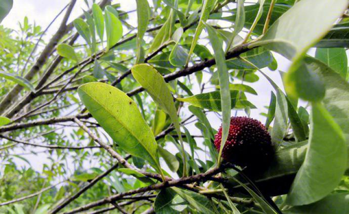 南京一区原人大常委会主任被查,其农庄里果树几乎被人摘光