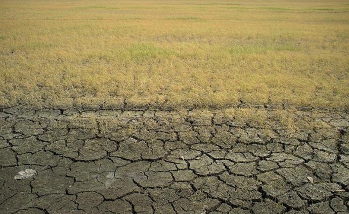 失控的农业?#21495;?#19994;工业化的危机与全球食物系统的隐患