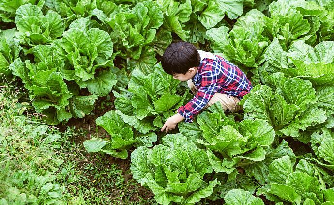 在上海租一塊地,帶孩子體驗種菜樂趣