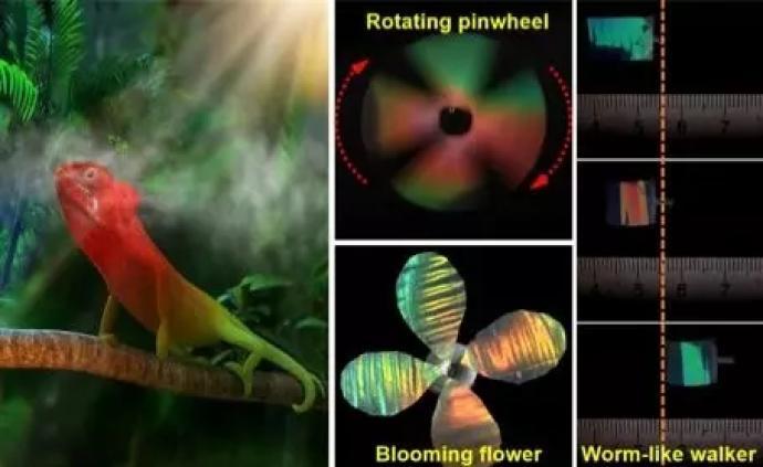 模仿蛇和變色龍,我國科學家研制出兼具變色和變形性能新材料