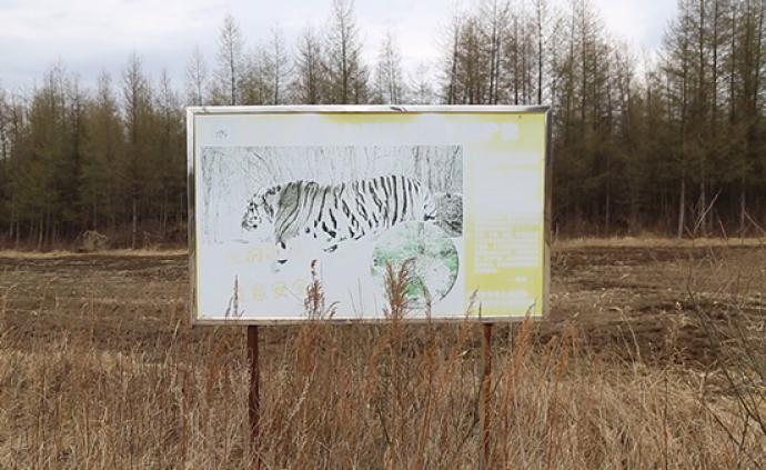 东北虎豹国家公园︱下山后原住民的彷徨与期待