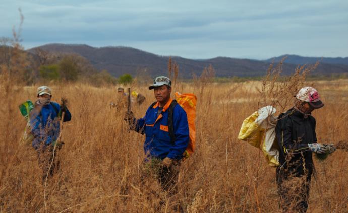 东北虎豹国家公园︱边境线上的虎进人退