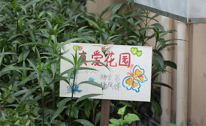 社区更新·影像|上海中大居民区③:被植物连接起来的社区