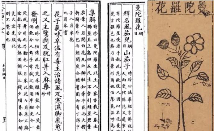 文学与历史真实中的蒙汗药