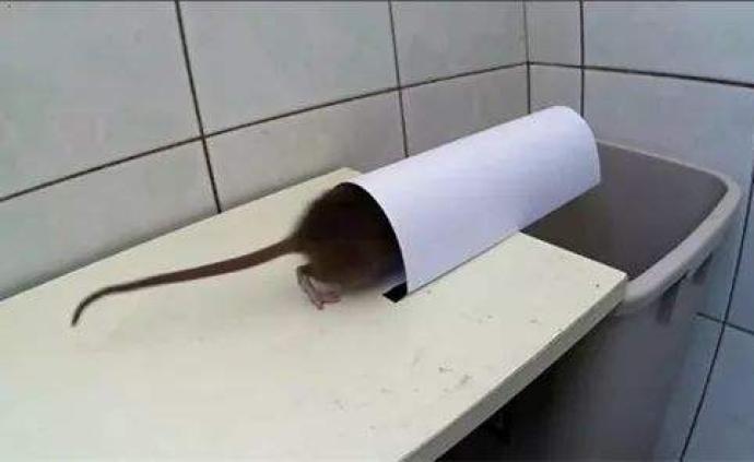 """贛州城區""""全民滅鼠"""":抓一只老鼠獎5元,獎勵每月據實撥付"""