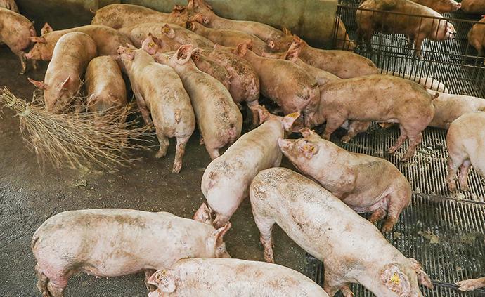 Z博士的脑洞|猪、环保与经济发展