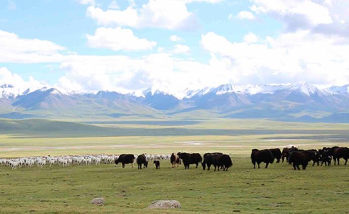 """祁连山国家公园︱一个牧民的""""转场""""之路"""
