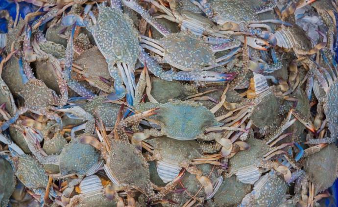 下厨房| 一口梭子蟹,吃到的是开海之后的肥美