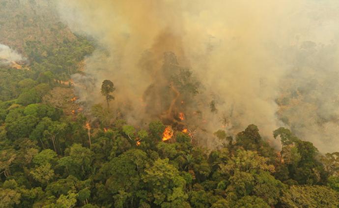 """齐泽克谈亚马逊大火:""""恐惧的生态""""是一种新的鸦片"""