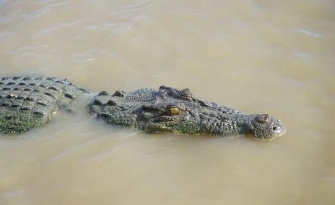 在澳洲旅行,每天都像丛林大冒险般刺激