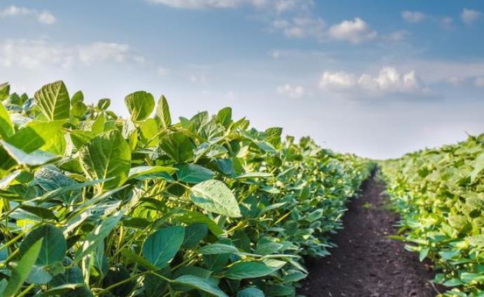 四千多品种获批,全球转基因作物种植面积已达25亿公顷