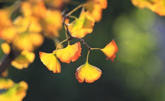 秋分节气江南大部或入秋,9月底前华西秋雨暂歇