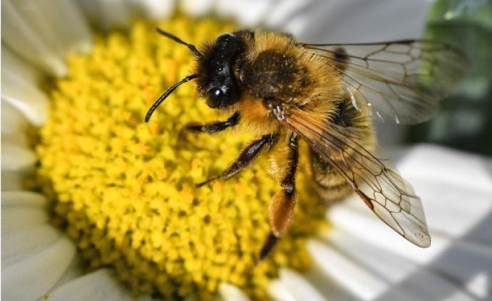 法国科学家发现蜜蜂能数到5,突破了认知能力的一道鸿沟