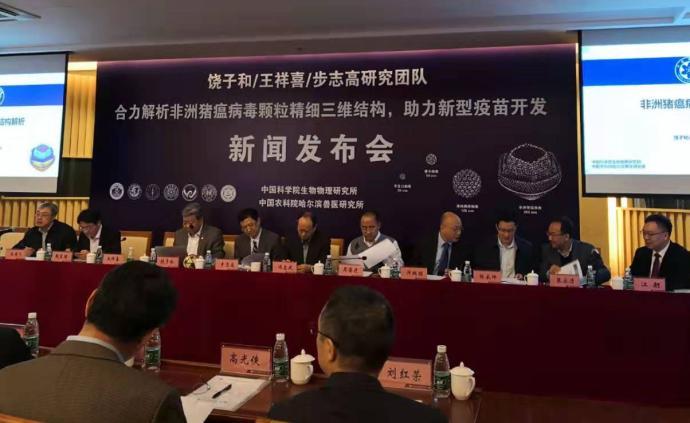 中國團隊解析非洲豬瘟病毒精細三維結構,助力新型疫苗開發