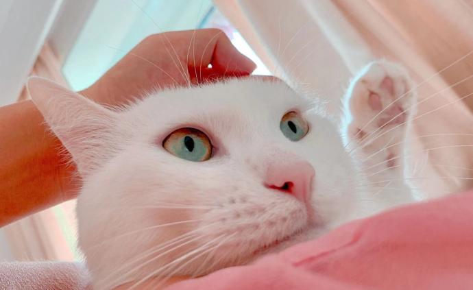 夜读丨不交女朋友,养一只猫?