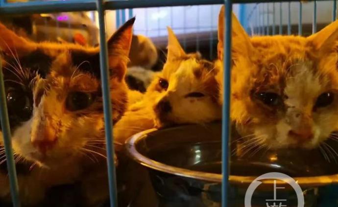 海南警方截获三百余只猫,动物保护协会:不截获或被送上餐桌