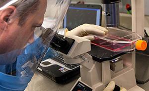 新知|灵长动物实验证实埃博拉新药有效