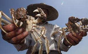 """""""蟹战""""对赌揭晓,""""哪个湖的蟹最好吃""""仍成无解之争"""