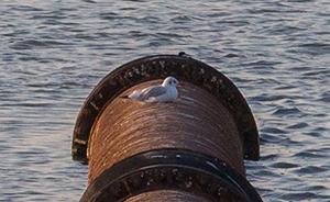 黄渤海海岸线湿地正在消失,向海要地,候鸟何处飞?