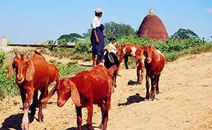 在缅甸发现中国︱来自大理的南诏后裔统一了缅甸