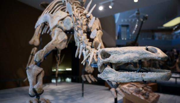 大恐龙又回来啦!提前探营上海自然博物馆新馆