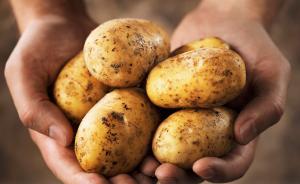 粮食不够吃了,让中国人主吃土豆可以保卫粮食安全么?
