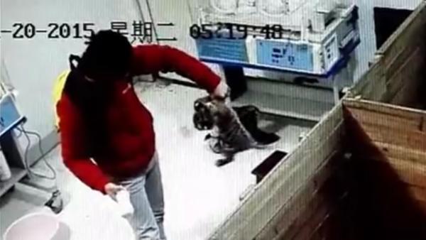 新生华南虎宝宝在南昌动物园遭暴力摔打
