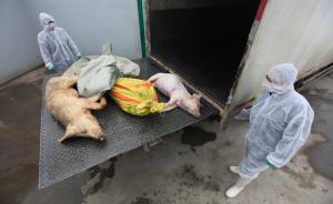 上海市民最担心食物中毒问题,食品安全法修订有望下月施行