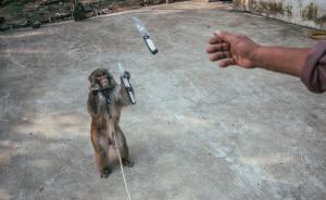 动物福利入法呼声再起,十年后耍猴或将受法律追责
