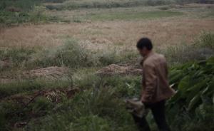 湖南衡阳:稻米镉含量被爆超标21倍