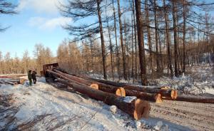 国家林业局局长:2016年底部署全面停止天然林商业采伐