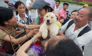全国人大代表郑孝和:建议明确禁止屠宰猫、狗,禁猫狗肉经营
