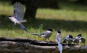 上海市区也能观鸟,四大城市公园已监测到164种野鸟