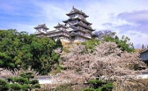 武大赏樱正当时:珞珈山的樱花从哪来?