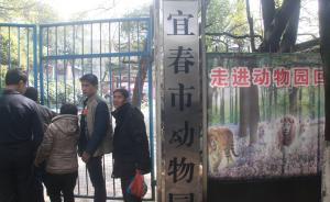 """江西宜春""""老虎伤人致死动物园""""被停业整顿"""
