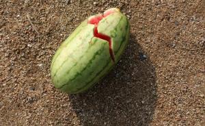 吃西瓜会因残留农药中毒?专家:概率小,但高毒农药渗透性强