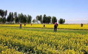 贺雪峰谈土地|当前土地确权是观念先行,耕种不便才是问题