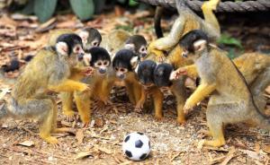 """专访一线野生动物保护人士:野保法已成""""足球法"""",怎么修?"""