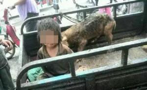 河南7岁男童遭虐待与猪同住,头上满是伤疤至今不会说话
